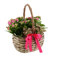 Treat Mum - Mother's Day Planted Houseplant - Design 6