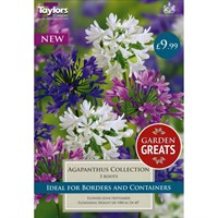 Taylors Bulbs Agapanthus Collection (Pack of 3 Roots) (SV308)