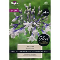 Taylors Bulbs Agapanthus Twister (Single Pack) (SSE164)