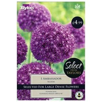 Taylors Bulbs Allium Ambassador - Single (SE2215)