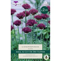 Taylors Bulbs Allium Atropurpureum - Pack of 6 (TP698)
