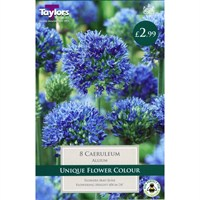 Taylors Bulbs Allium Caeruleum - Pack of 8 (TP693)