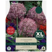 Taylors Bulbs Allium Christophii - Pack of 15 - XL Value Range (XL691)