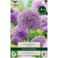 Taylors Bulbs Allium Gladiator - Pack of 2 (TP956)