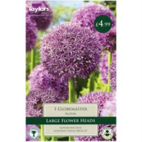 Taylors Bulbs Allium Globemaster - Single (TP688)