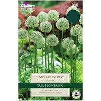 Taylors Bulbs Allium Mount Everest - Pack of 2 (TP687)