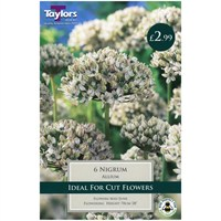 Taylors Bulbs Allium Nigrum - Pack of 5 (TP880)