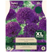 Taylors Bulbs Allium Purple Sensation - Pack of 15 - XL Value Range (XL697)