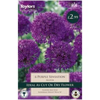 Taylors Bulbs Allium Purple Sensation - Pack of 5 (TP697)