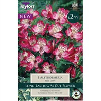 Taylors Bulbs Alstroemeria Red Lion (Single Pack) (TS844)