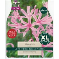 Taylors Bulbs Amarine Belladiva - Summer Flowering Bulb Of The Year (Pack of 3) (XL567)