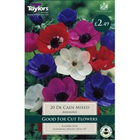 Taylors Bulbs Anemone De Caen Mixed (20 Pack) (TS625)