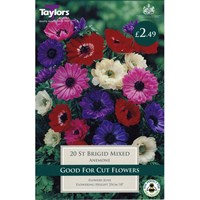 Taylors Bulbs Anemone St. Brigid Mixed (20 Pack) (TS627)