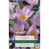 Taylors Bulbs Crocus Firefly - Pack of 20 (TP676)