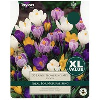 Taylors Bulbs Crocus Large Flowering Mixed - Pack of 50 - XL Value Range (XL655)