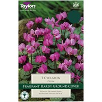 Taylors Bulbs Cyclamen Coum - Pack of 2 (TP734)