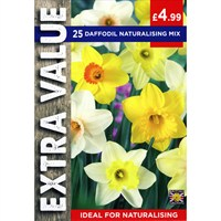 Taylors Bulbs Daffodil Naturalising Mix - Pack of 20 - Extra Value Range (EV099)