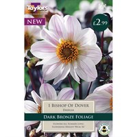 Taylors Bulbs Dahlia Bishop Of Dover (Single Pack) (TS469)