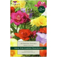 Taylors Bulbs Freesia Mixed Double (10 Pack) (TS675)