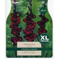 Taylors Bulbs Gladioli Black Star (30 Pack) (XL507)