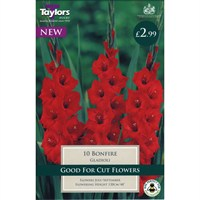 Taylors Bulbs Gladioli Bonfire (10 Pack) (TS100)