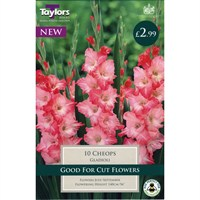 Taylors Bulbs Gladioli Cheops (10 Pack) (TS116)