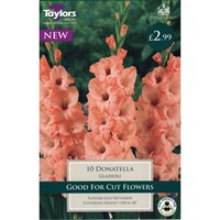 Taylors Bulbs Gladioli Donatella (10 Pack) (TS104)