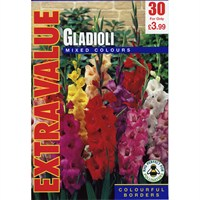 Taylors Bulbs Gladioli Mixed Colours (40 Pack) (ESV503)