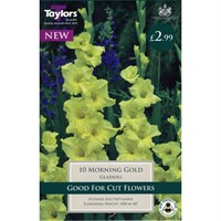 Taylors Bulbs Gladioli Morning Gold (10 Pack) (TS161)