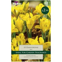 Taylors Bulbs Iris Danfordiae - Pack of 7 (TP780)