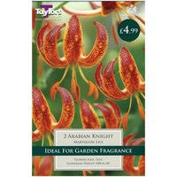 Taylors Bulbs Lily Arabian Knight - Pack of 2 (TP890)