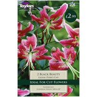 Taylors Bulbs Lily Black Beauty - Pack of 2 (TP858)