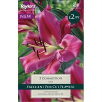 Taylors Bulbs Lily Commotion (2 Pack) (TS598)