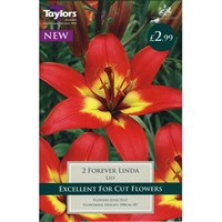 Taylors Bulbs Lily Forever Linda (2 Pack) (TS519)