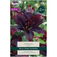 Taylors Bulbs Lily Mascara - Pack of 2 (TP896)