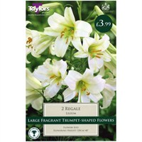 Taylors Bulbs Lily Regale - Pack of 2 (TP874)