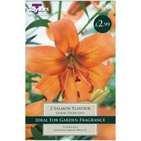 Taylors Bulbs Lily Salmon Flavour - Pack of 2 (TP897)