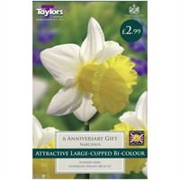 Taylors Bulbs Narcissi Anniversary Gift - Pack of 6 (TP142)