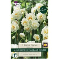 Taylors Bulbs Narcissi Bridal Crown - Pack of 5 (TP171)