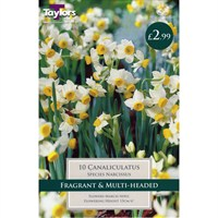 Taylors Bulbs Narcissi Canaliculatus - Pack of 10 (TP207)