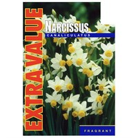 Taylors Bulbs Narcissi Canaliculatus - Pack of 20 - Extra Value Range (EV207)