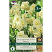 Taylors Bulbs Narcissi Cheerfulness White - Pack of 5 (TP129)