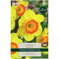 Taylors Bulbs Narcissi Delibes - Pack of 6 (TP106)