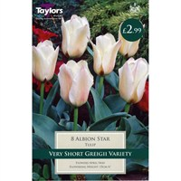 Taylors Bulbs Tulip Albion Star - Pack of 8 (TP525)