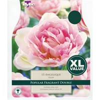 Taylors Bulbs Tulip Angelique - Pack of 18 - XL Value Range (XL432)