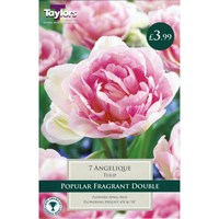 Taylors Bulbs Tulip Angelique - Pack of 7 (TP432)