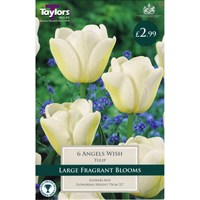 Taylors Bulbs Tulip Angels Wish - Pack of 6 (TP476)