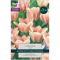 Taylors Bulbs Tulip Apricona - Pack of 6 (TP400)