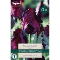 Taylors Bulbs Tulip Black Parrot - Pack of 7 (TP463)
