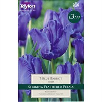 Taylors Bulbs Tulip Blue Parrot - Pack of 7 (TP465)